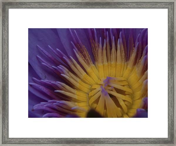 Natural Colors Framed Print