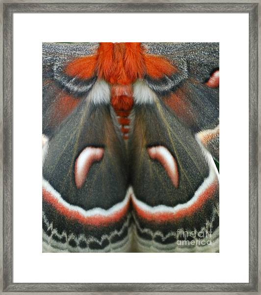 Natural Creation Framed Print