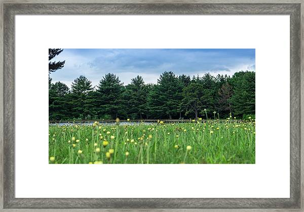 Evergreen Lake - A Groundhog View Framed Print