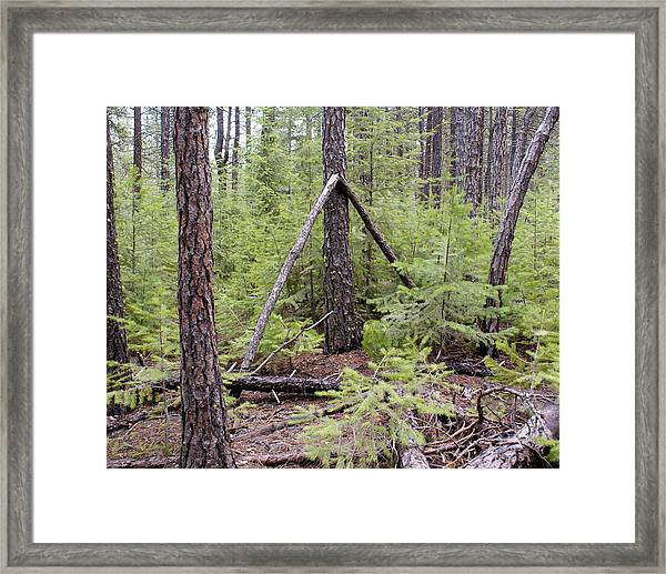 Natural Peace In The Woods Framed Print