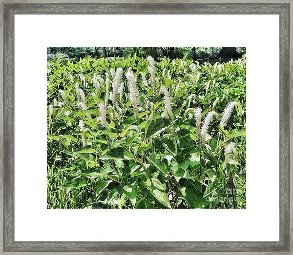 Natural Vision Framed Print