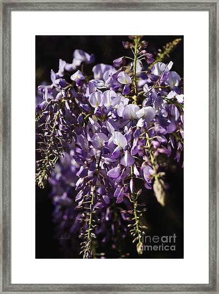 Natural Wisteria Bouquet Framed Print