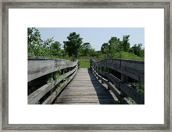 Nature Bridge Framed Print