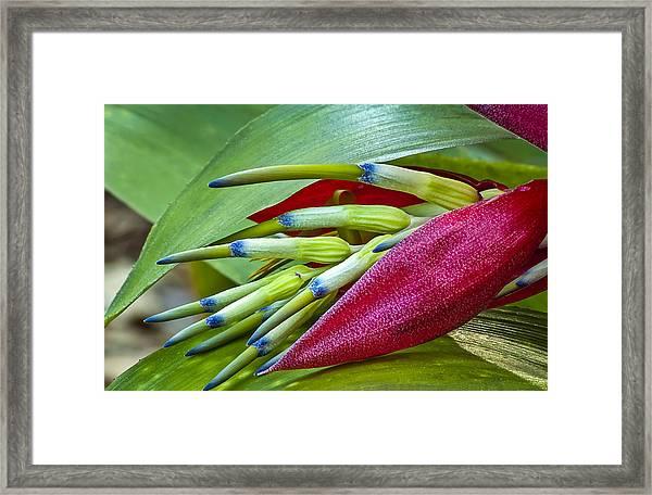 Nature In Bloom Framed Print