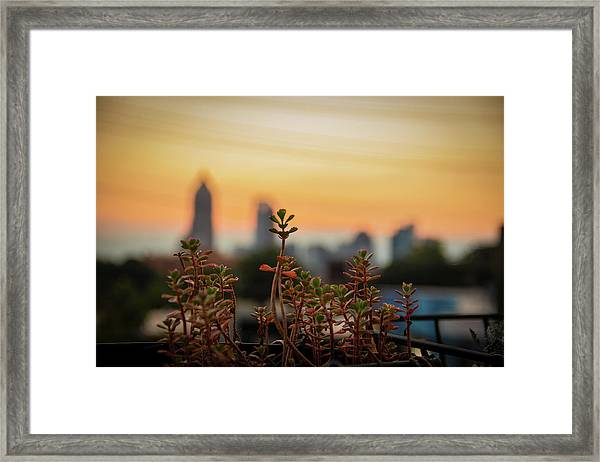 Nature In The City Framed Print