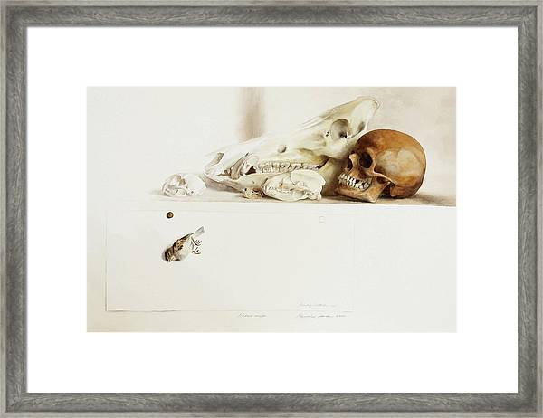 Nature Morte Framed Print