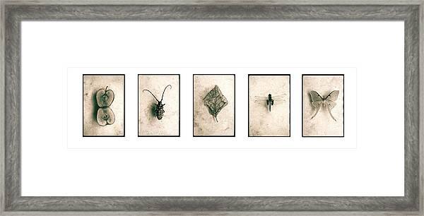 Nature Series Framed Print