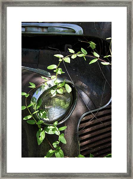 Nature Takes Over Framed Print