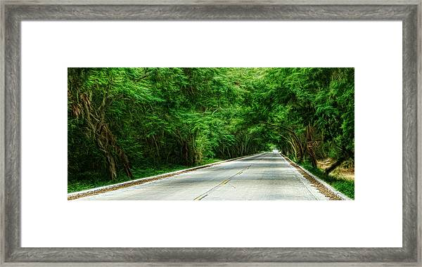 Nature's Canopy Framed Print