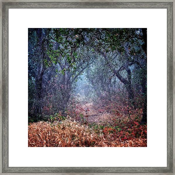 Nature's Chaos, Arroyo Grande, California Framed Print
