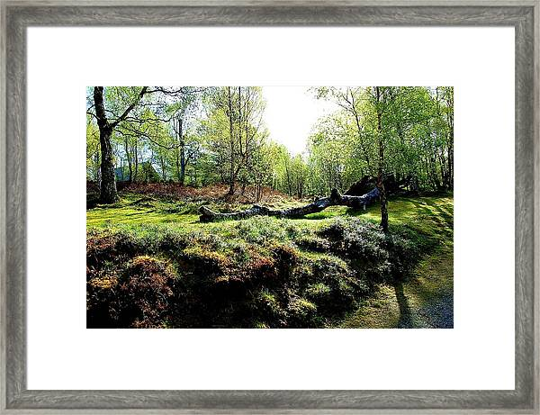Nature's Cycle Framed Print