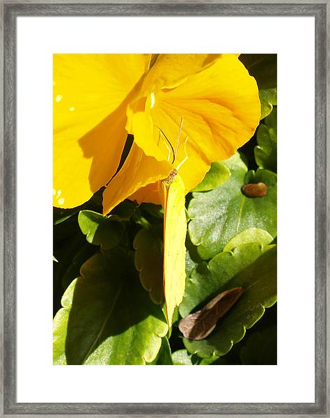 Nature's Disquise Vi Framed Print