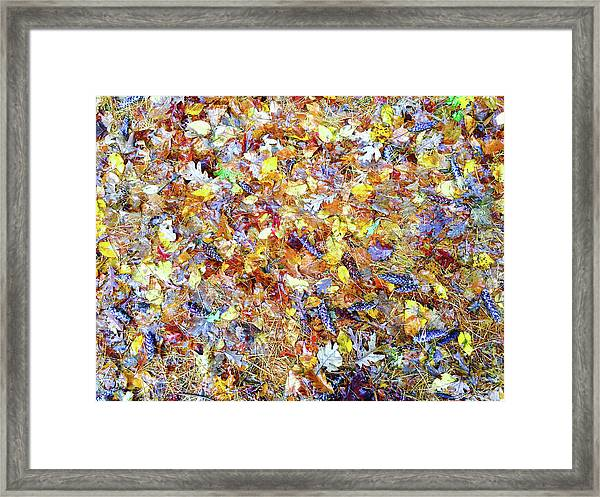 Natures Fall Falling Patterns Framed Print