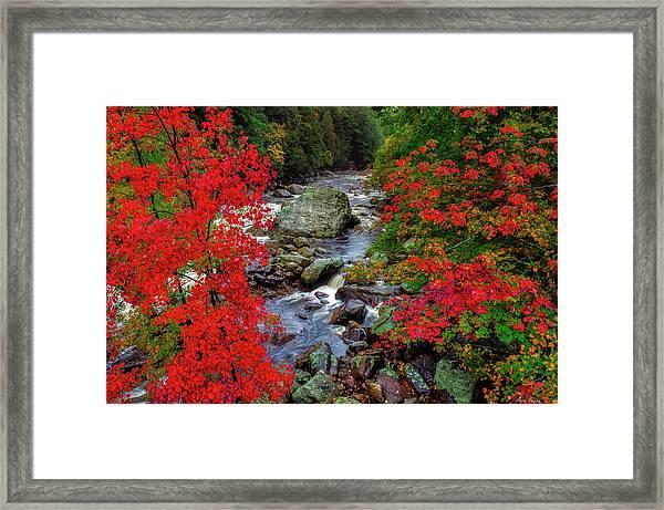 Natures Frame Framed Print