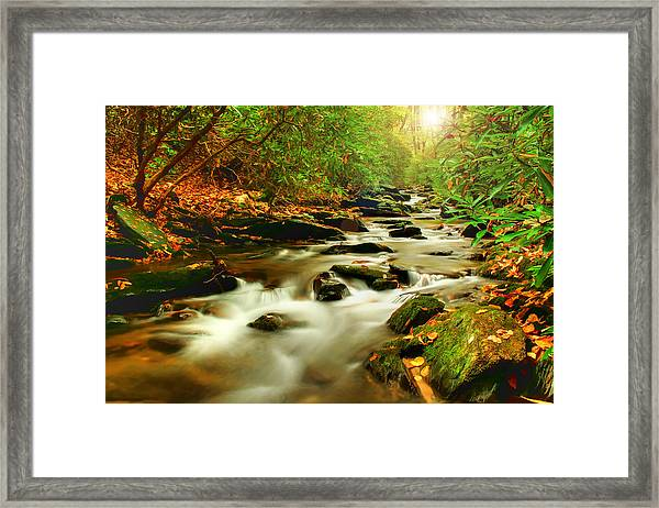 Natures Journey Framed Print