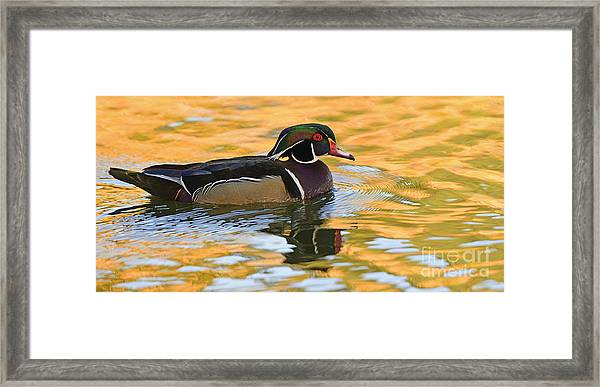 Natures Mirror   Framed Print