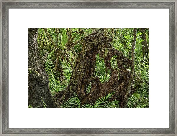 Nature's Sculpture Framed Print