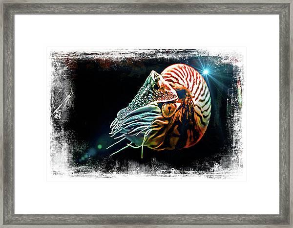 Nautilus Dreams Framed Print