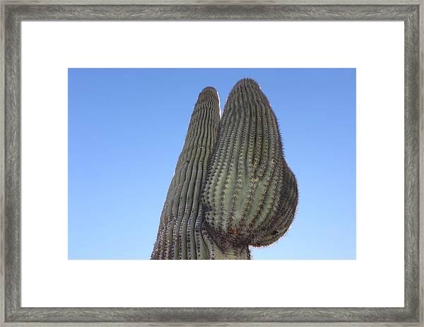 Framed Print featuring the photograph Wickenburg Saguaro  by Antonio Romero