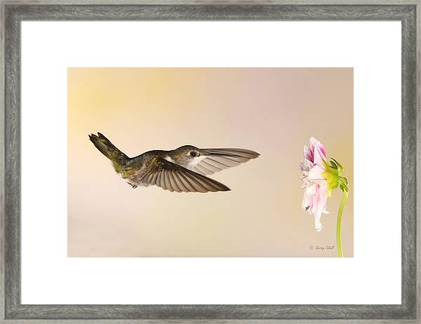 Nectar Seeking Missile Framed Print
