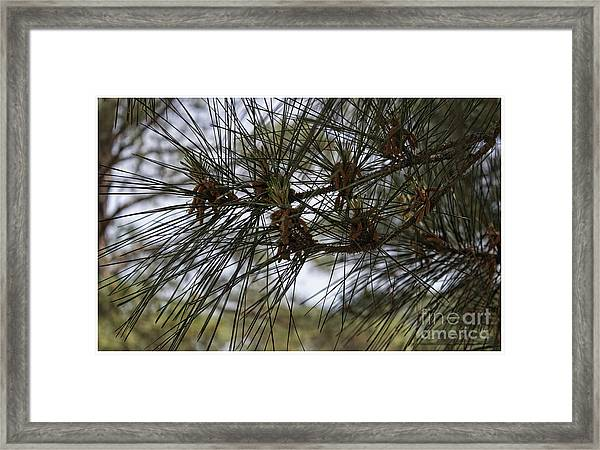 Needles Attached Framed Print