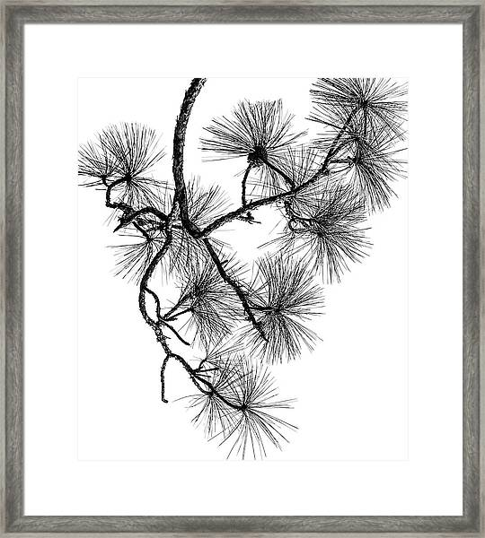 Needles II Framed Print