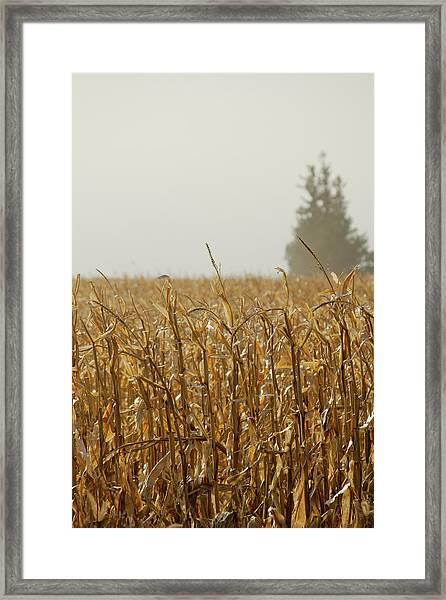 Neighborhood Pines Framed Print