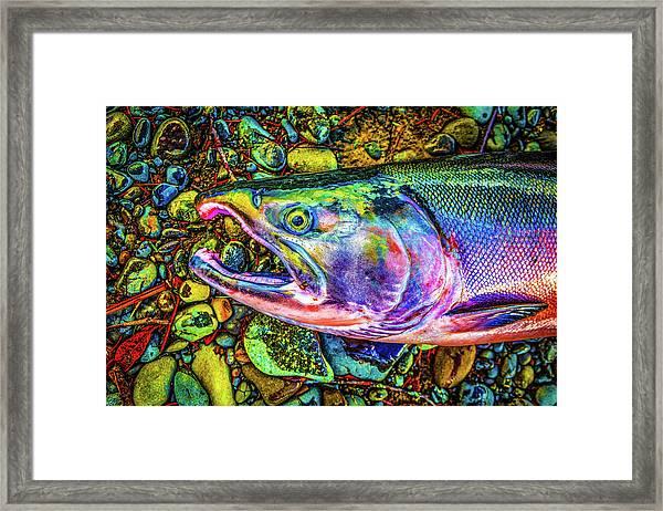Neon Coho  Framed Print