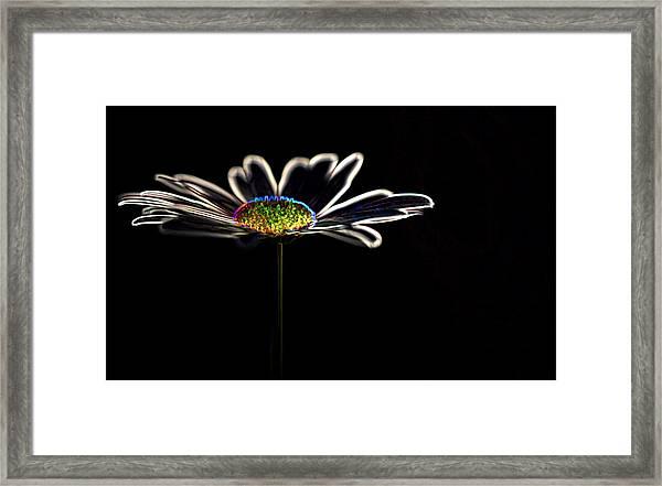 Neon Flower Framed Print