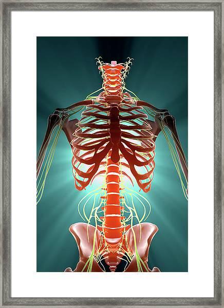 Nerves Framed Print