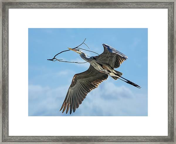 Nest Builder Framed Print