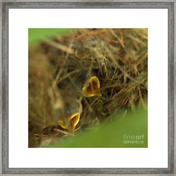 Nestlings Framed Print