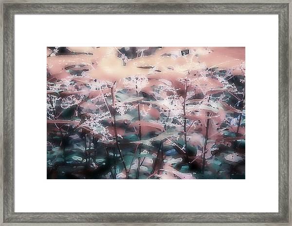 Nettle 63 Framed Print