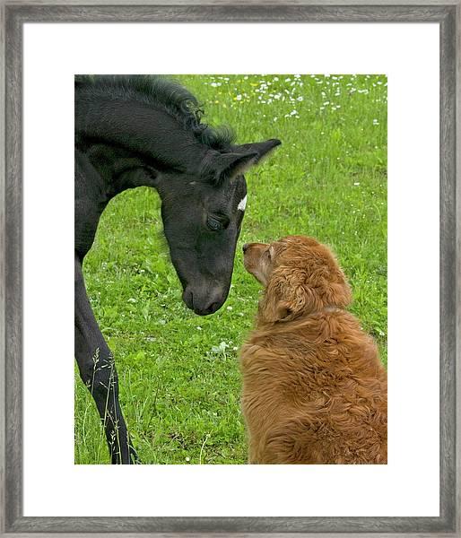 New Born Meeting Dog Framed Print