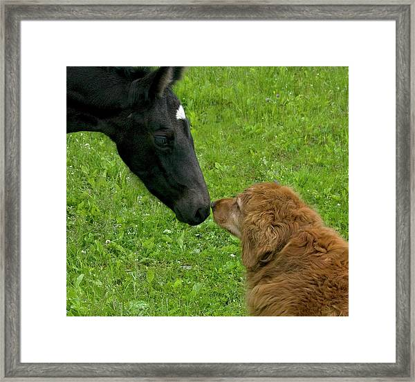 New Born Touching Noses Framed Print