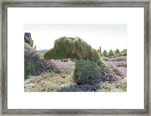 New Brunswick's Entry Is The Canadian Horse 4 Framed Print