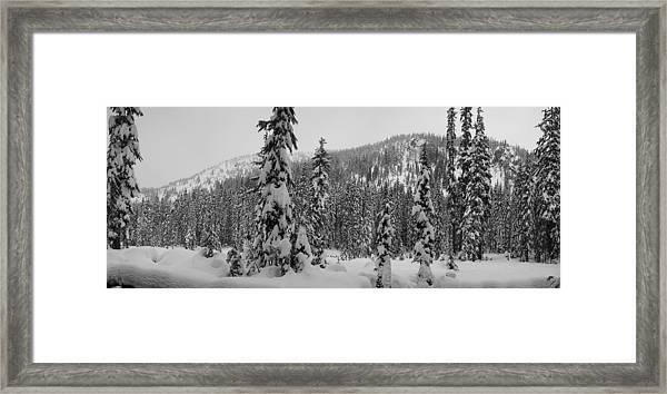 New Snow Framed Print by Mark Camp