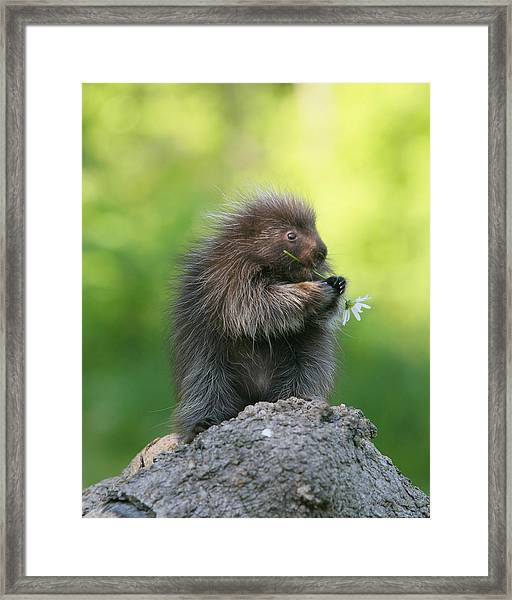 Nibble Nibble Framed Print