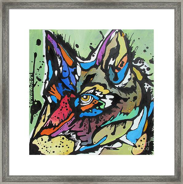 Nico The Coyote Framed Print