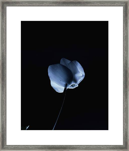 Night And A Blue Light Framed Print