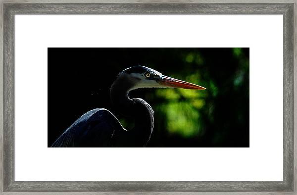 Night Hunter Framed Print