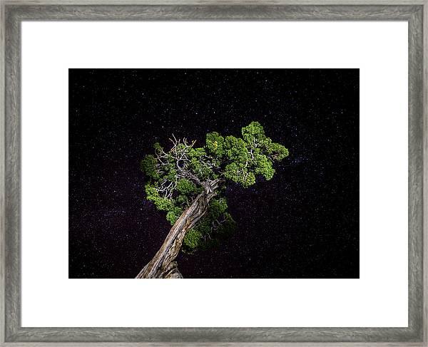 Night Tree Framed Print