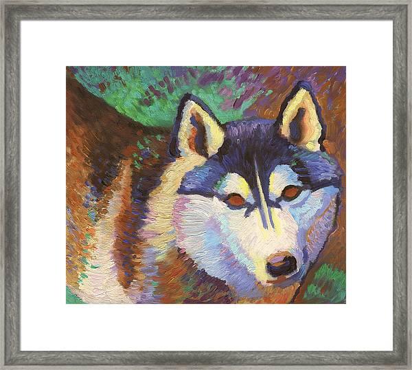 Nikita  Framed Print