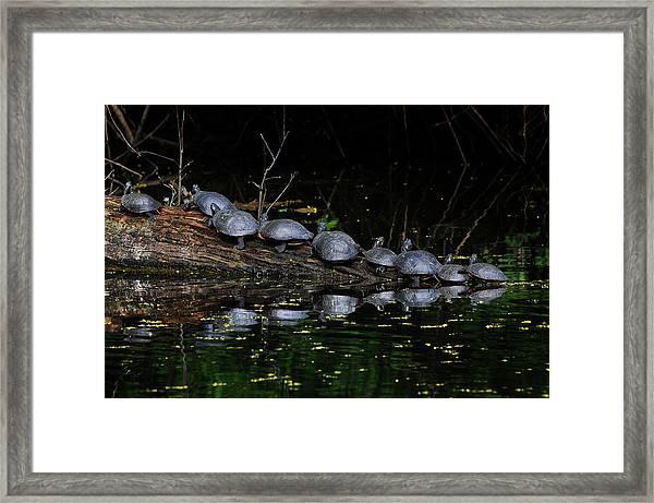 Nine In A Row Framed Print