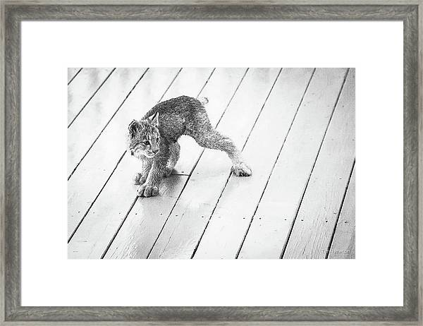 Ninja Lynx Kitty Bw Framed Print