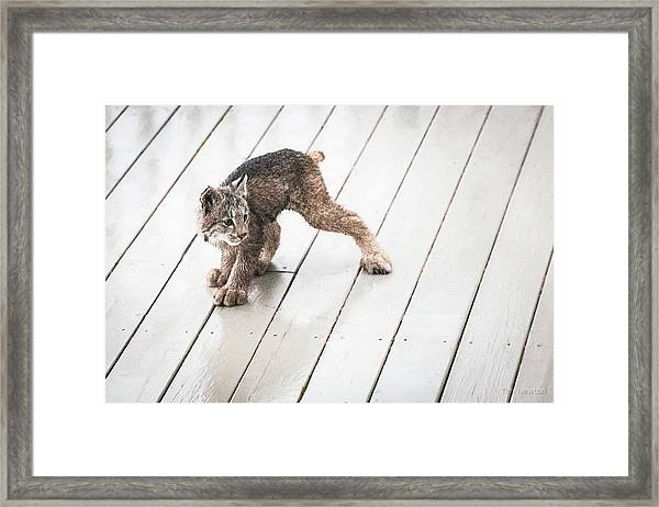 Ninja Lynx Kitty Framed Print