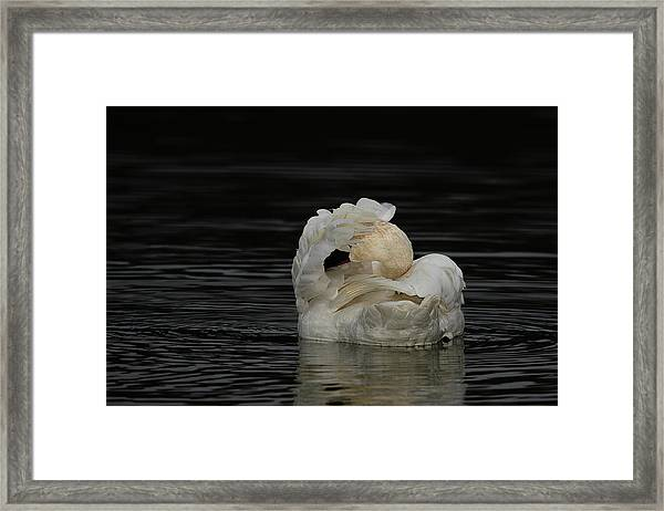 No Pictures Please Framed Print
