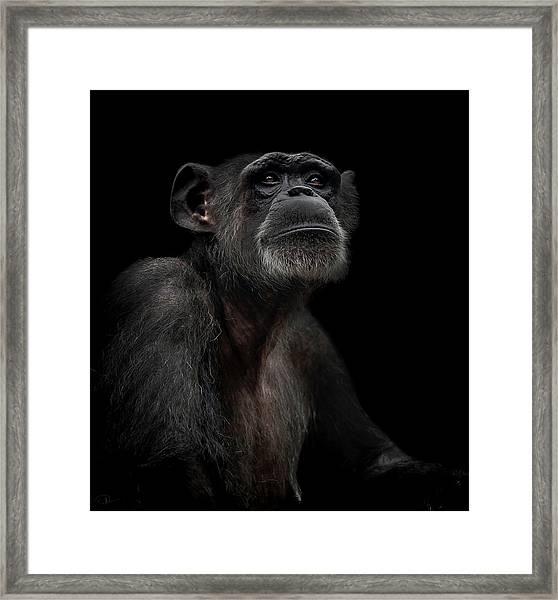 Noble Framed Print