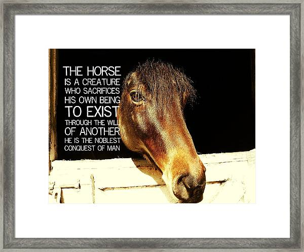 Noble Stallion Quote Framed Print