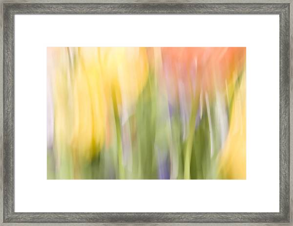 North Hills Tulips I Framed Print